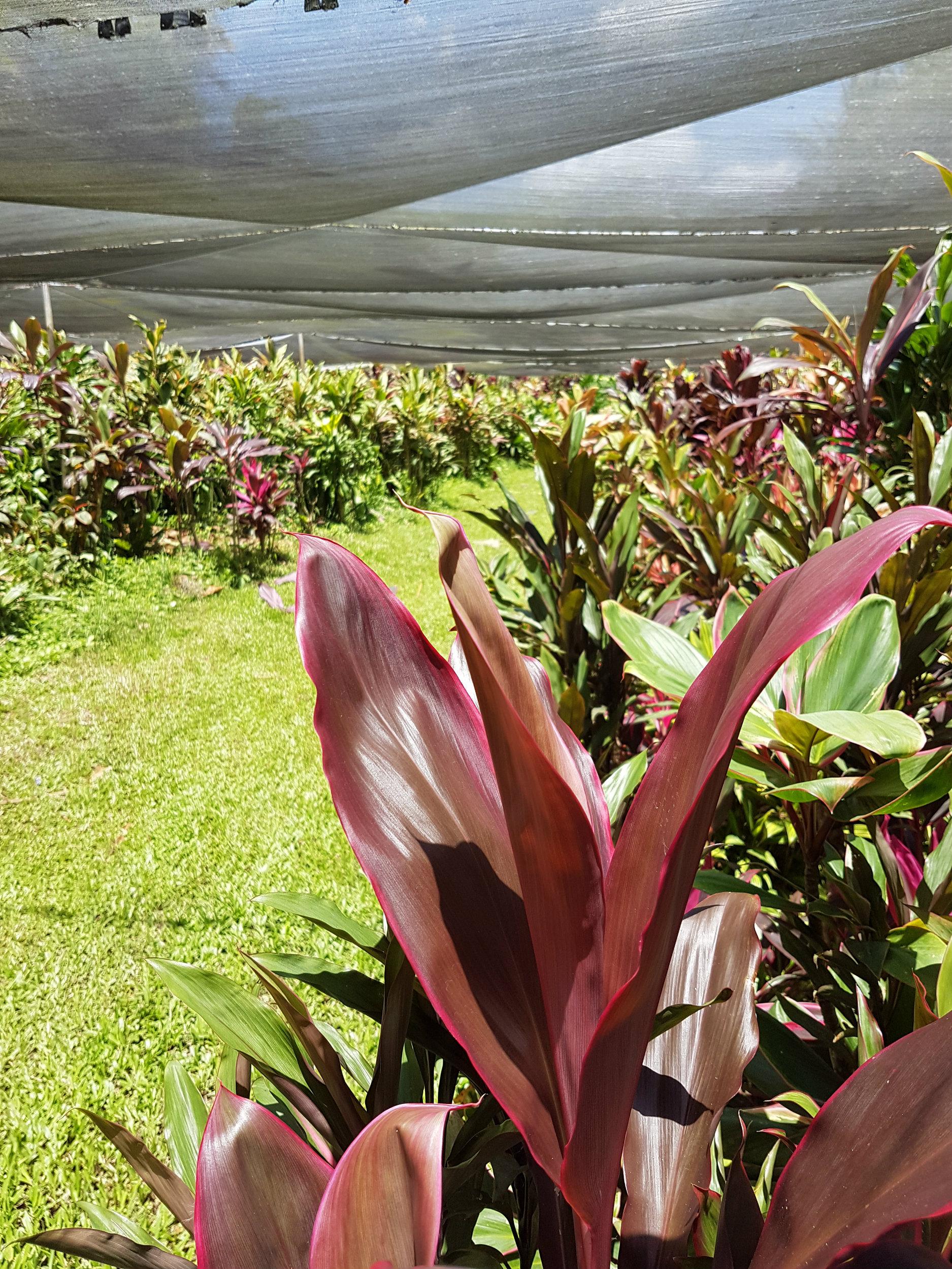 foliage-shadehouse.jpg